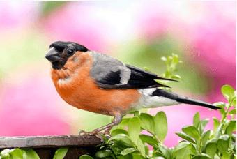 Garden birdwatch